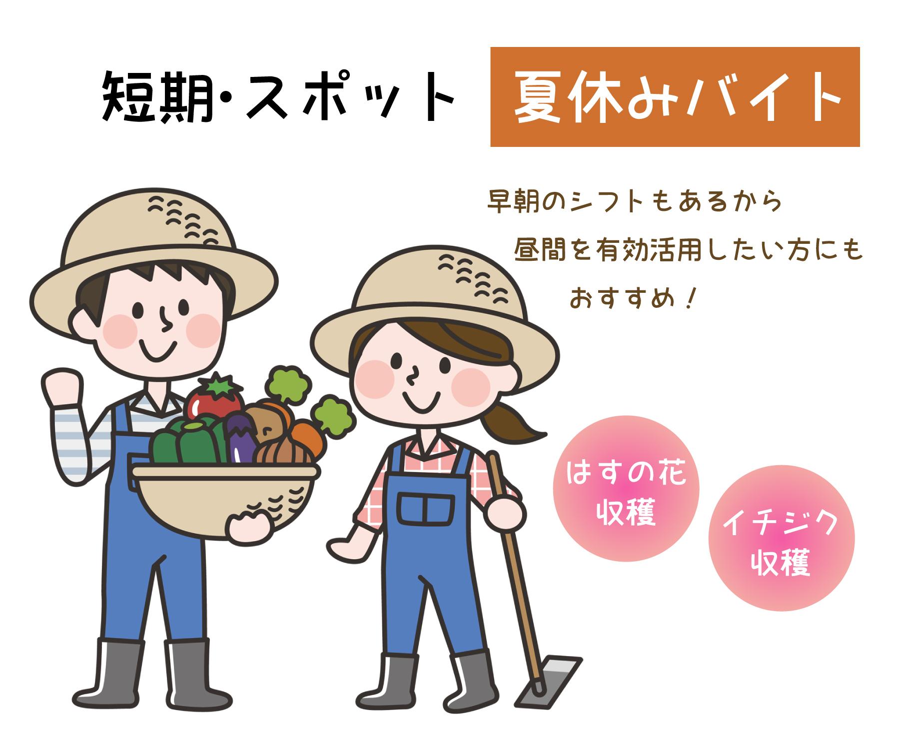 日払い・週払い求人募集終了:農業 城陽市 夏休みバイト~9月末 ハスの花・イチジクの収穫やパック詰めイメージ